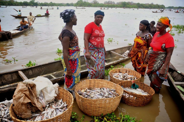 fish farming in nigeria: 9jaagric.com.ng
