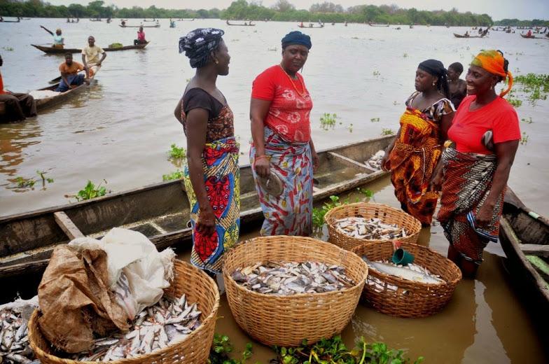 fish farming in nigeria: 9jaagric.com.ng