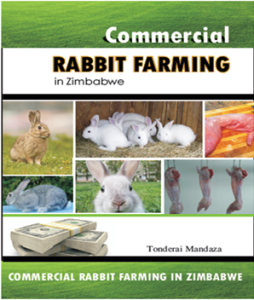commercial rabbit farming in Zimbabwe