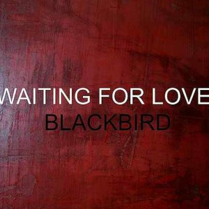 Black Bird – Waiting For Love