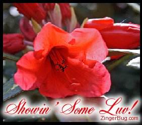 Another ShowinLove image: (showin_love_red_flower) for MySpace from ZingerBug.com