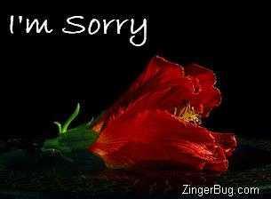 Another sorry image: (sorry_red_flower) for MySpace from ZingerBug
