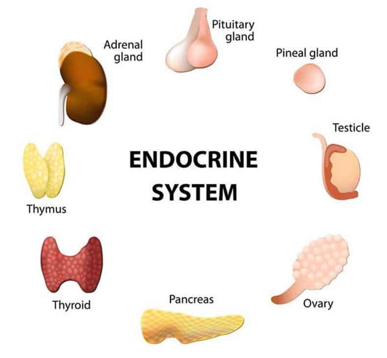 Kontroliuojame-hormonus_Ziniu-svetaine Menopauzė ir hormonai. Ką valgyti moterims menopauzės metu?