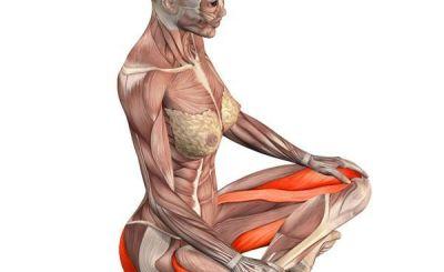 Gimnastika-moterų-vidaus-organams-sustiprinti