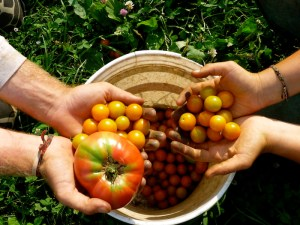 religion, interfaith, and social justice perspectives of food justice
