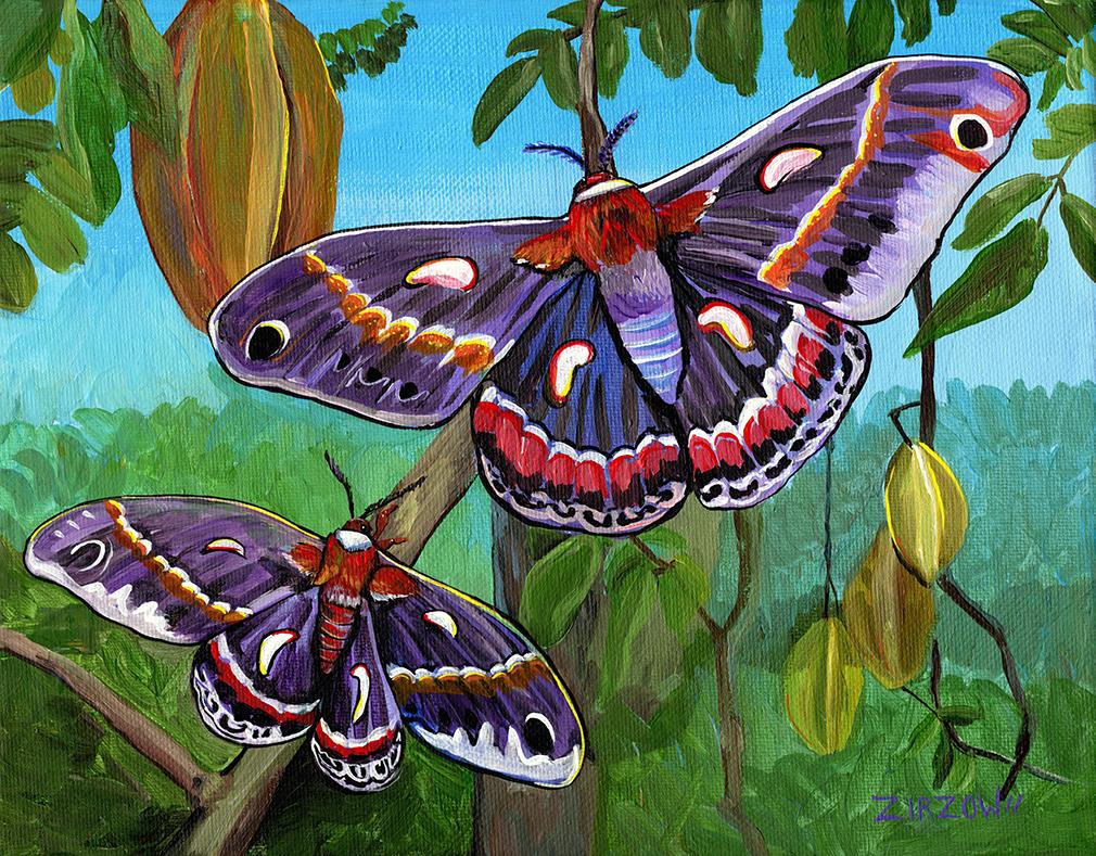 The Cecropia Moths