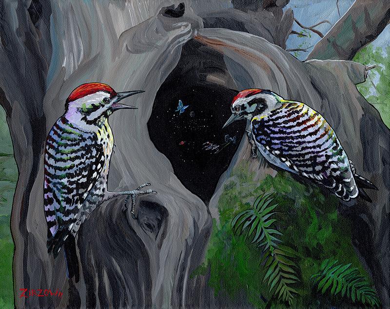 Woodpecker Wonder