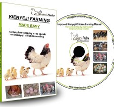 Kienyeji Chicken farming guide