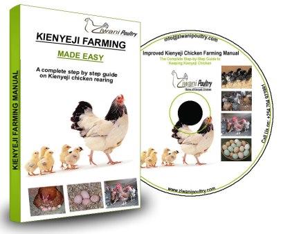 Kienyeji Chicken farming guide