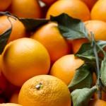Orange Marmalade And Bocuse d'Or 2013