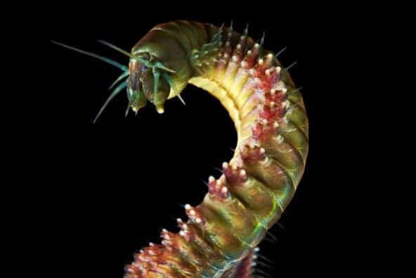 6 monster ringworm
