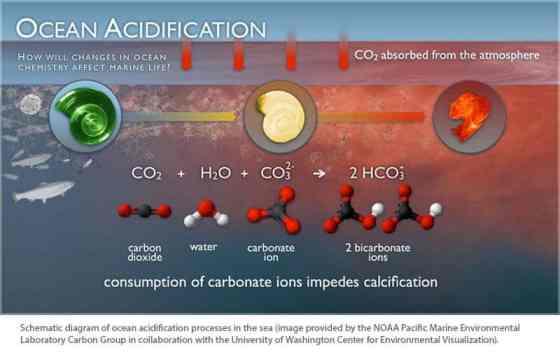 Ocean-Acidification-diagram