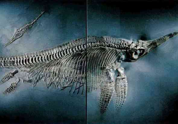 ichtyosaur fossil