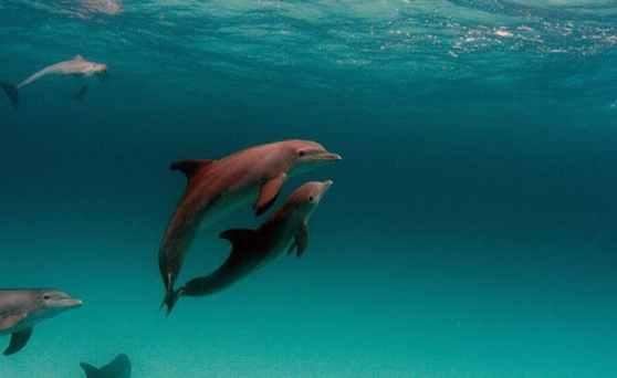 dolphins cliques