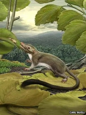 The earliest placental mammal probably ate insects, and weighed no more than a few hundred grams. (c) Carl Buell