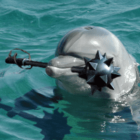 killer-commando-dolphin