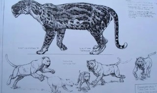 Illustration of a cougar-like nimravid. (c) thorthebarbarian.com