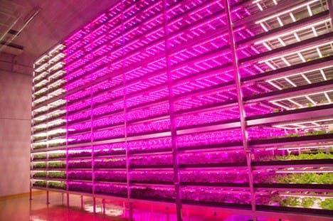 biggest indoor farm
