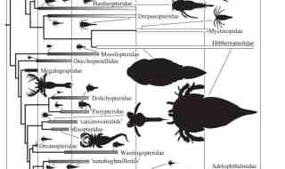 Eurypterid systematics. Source: Lamsdell & Braddy (2010).