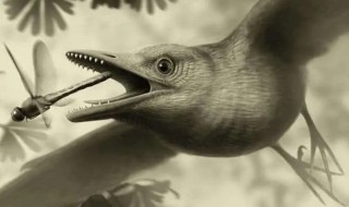 bird flying dinosaur