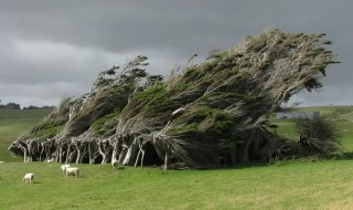 twisted trees slope point