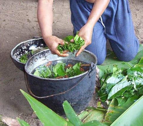Ayahuasca being prepared in the Napo region of Ecuador.