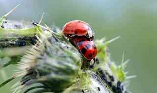 Ladybugs.