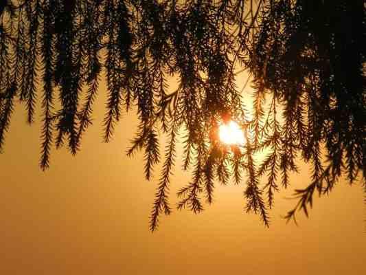 trees global warming