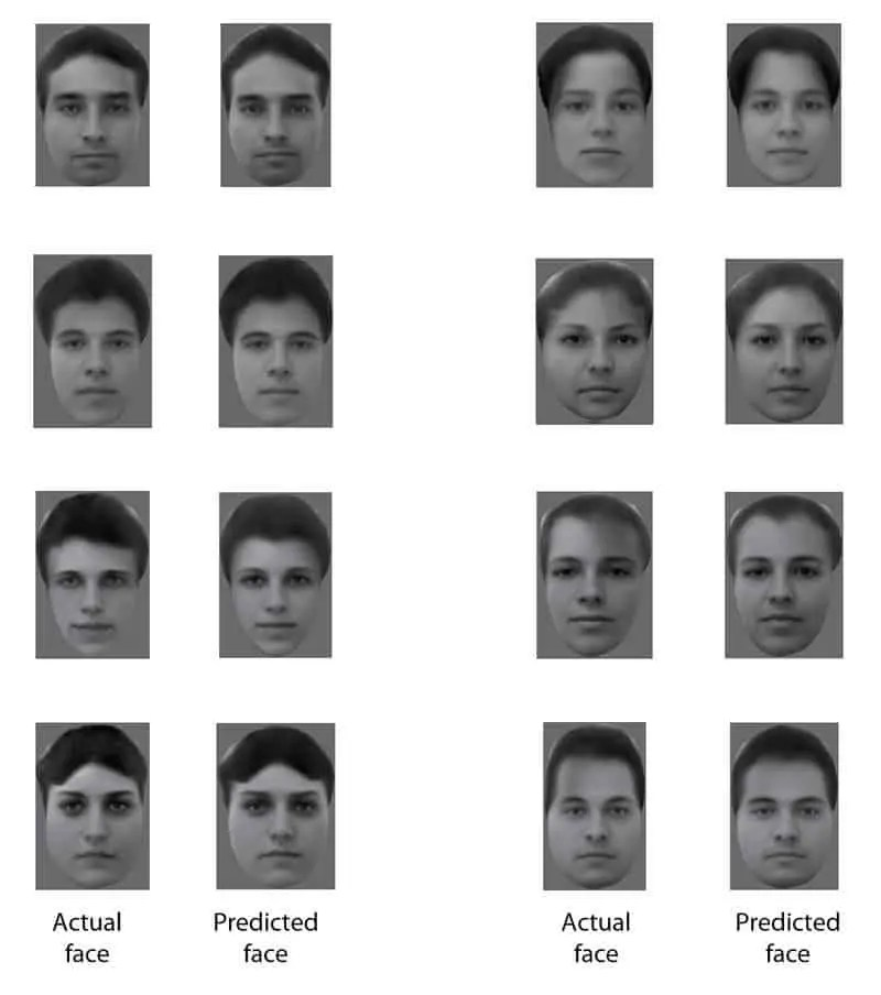 The left column shows the actual face shown to the monkeys, the right column shows the image reconstructed from monkey brain activity, the predicted face). Image credits: Doris Tsao