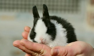 Cute hare.