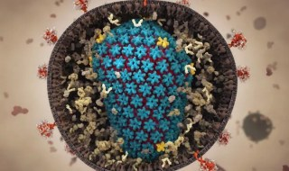 The capsid, in blue, protects the virus after it enters a cell and shuttles it to the nucleus, where it completes the process of infection. Credit: Juan Perilla.