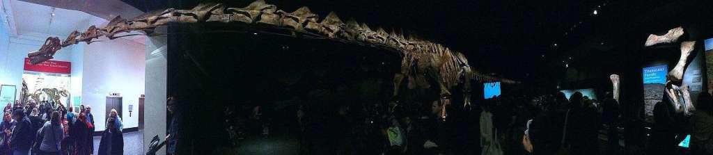 Titanosaur.
