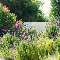3 przepisy jak zrobić olejek lawendowy