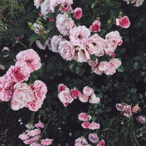 5 Instagram Flower Accounts To Follow Right Now (+ nsale giveaway)