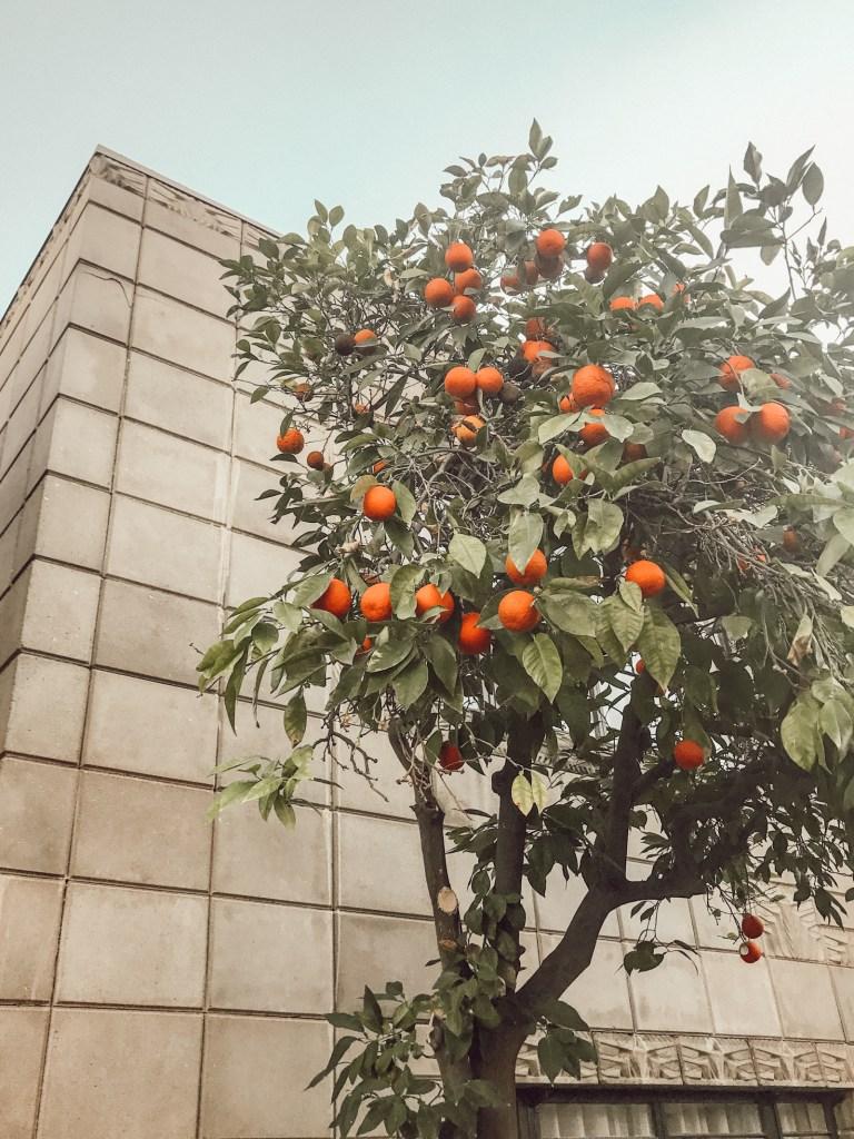 Orange Tree, Arizona Biltmore | Pittsburgh Lifestyle Blog, Zoë With Love