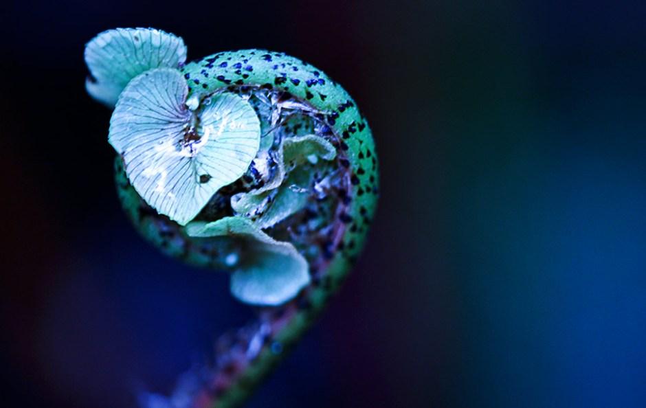 "2015 SEPTEMBER   © Fantommst - Lisa Ridings -- """"Tiny start to life"" -- Fern beginnings in the wetlands at Okarito."