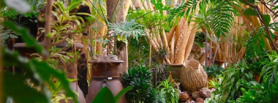 The Tropics 914 c