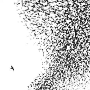 Wilco-Sky-Blue-Sky-cover