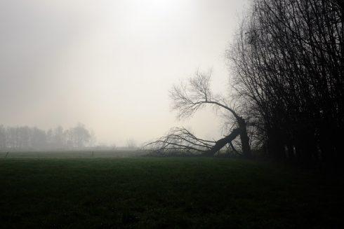 Afbeeldingsresultaat voor herfst+bomen+wind zwart wit