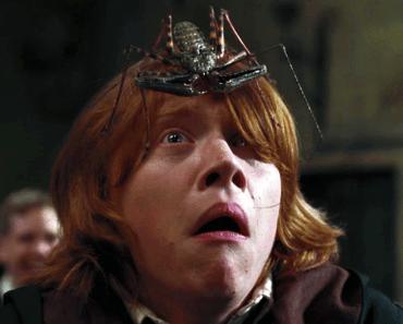 Ron Weasly - Aracnofobico