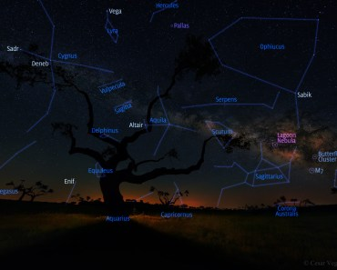 El árbol de la galaxia