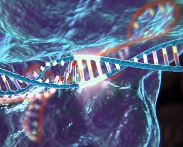 CRISP/CAS9 o cómo acelerar miles de veces la evolución