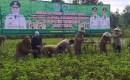 Wakil Bupati Pamekasan Pimpinan Gerakan Panen Kacang Tanah di Desa Campor