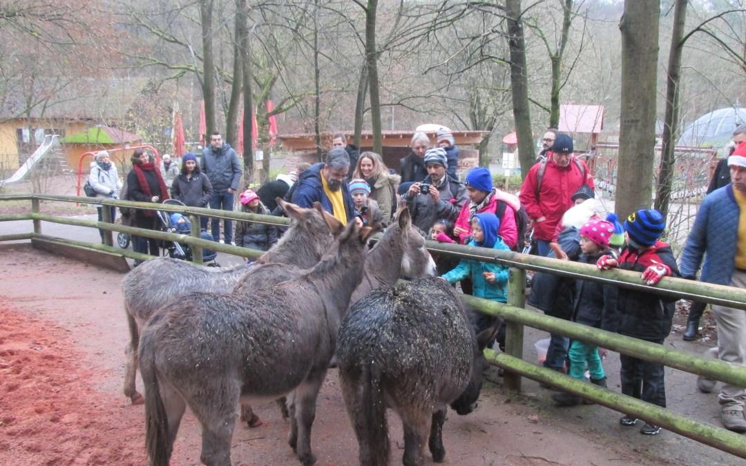Weihnachts – Spaziergang im Zoo Kaiserslautern