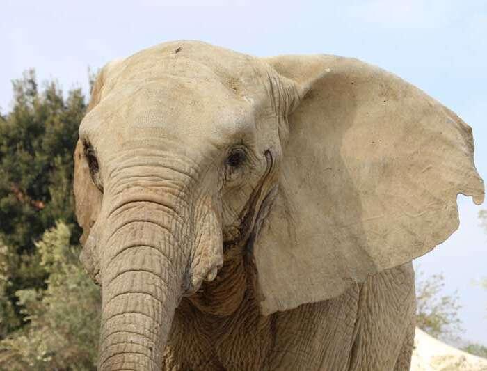 elefante zooabruzzo