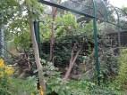 Anlage Rote Pandas