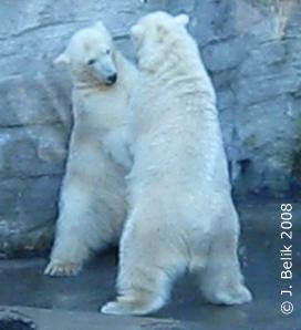 Arktos & Nanuq, 1 Jahr alt, 15. Nov 2008