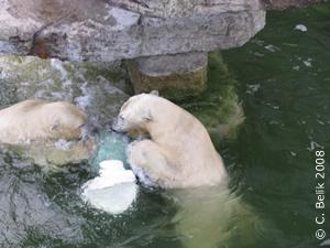 Arktos und Nanuq, 13 Monate alt, 25. Dez 2008