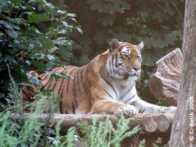 In Memoriam: Tanya beobachtet ihre Zwillinge, 23. August 2008