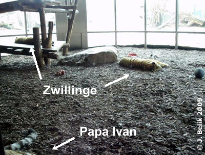 Die Tigerkinder schlafen endlich ..., 27. Februar 2009